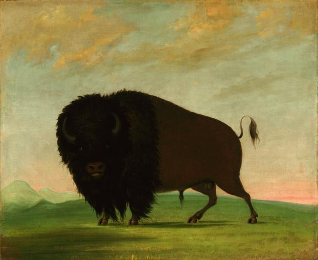 'Picturing the American Buffalo: George Catlin and Modern Native American Artists' exhibit at the Smithsonian American Art Museum in DC