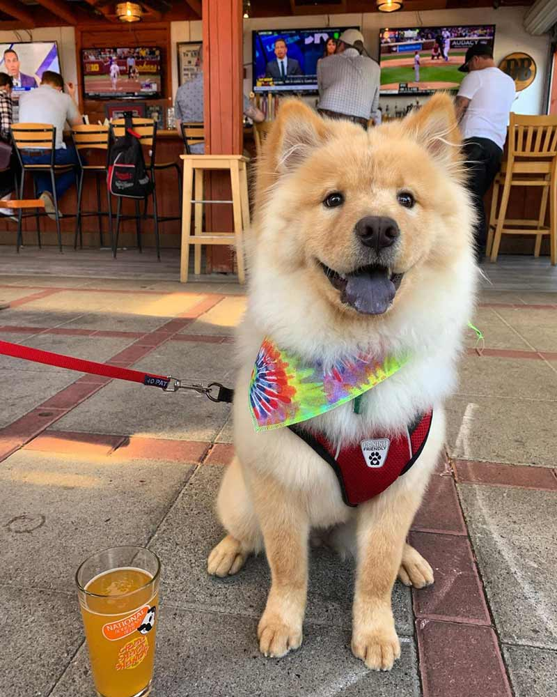 @coco_the_dcchow - Dog at The Brig beer garden near Barracks Row - DC's best beer gardens