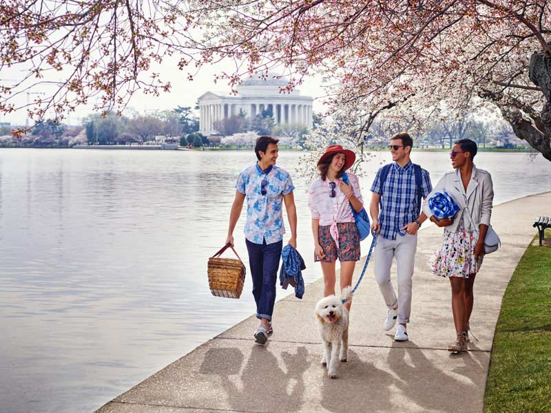 Friends walking along Tidal Basin & cherry blossoms - Spring in Washington, DC