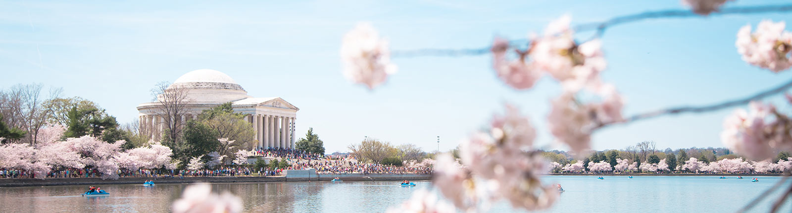 Spring and cherry blossoms in Washington, DC - Your ultimate guide to the National Cherry Blossom Festival and springtime in DC