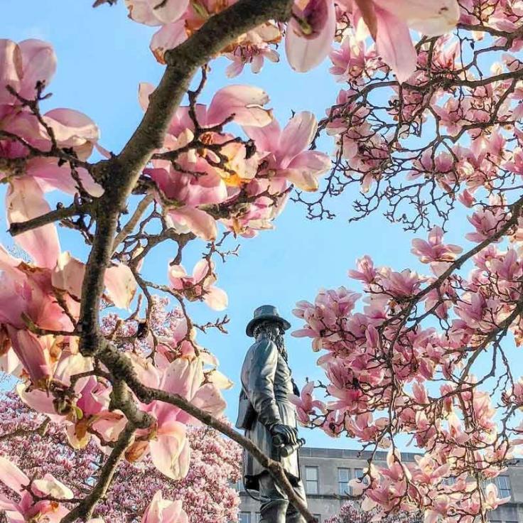 @nancyinusa - Flores de primavera en Rawlins Park en Foggy Bottom - Cosas que hacer esta primavera en Washington, DC