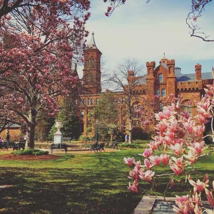 @ pinkie925 - Flores de primavera frente al Castillo Smithsonian en el National Mall en Washington, DC