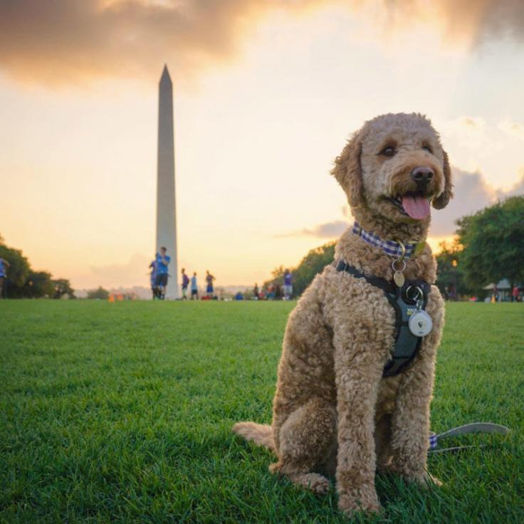 @piper.bee - Dog on the National Mall at sunset - Summer things to do in Washington, DC