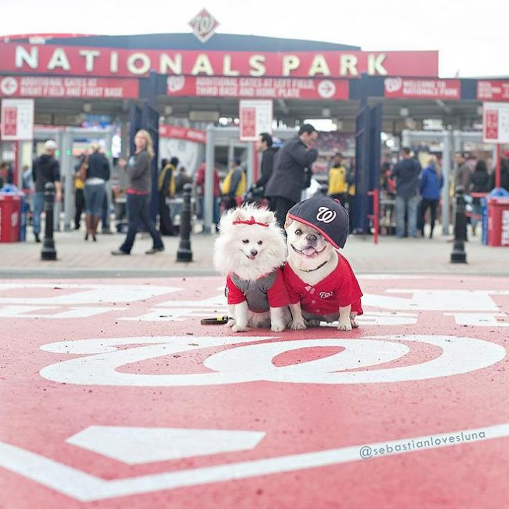 @sebastianlovesluna - Washington Nationals Baseball - Things to Do in Washington, DC
