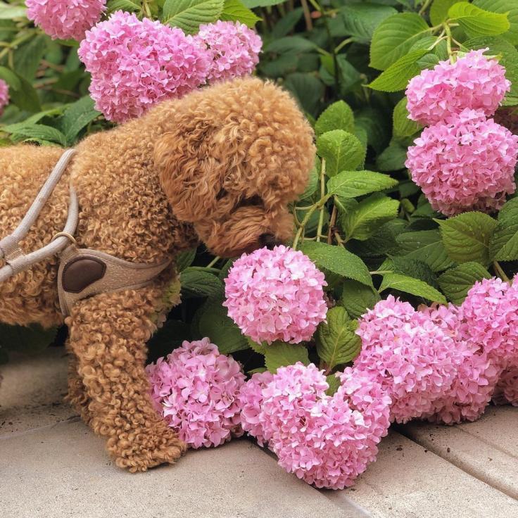 @winston.inwashington - Hund riecht Blumen
