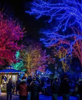@fiz1point5 - ZooLights Winterferienfeier im Smithsonian National Zoo - Kostenlose familienfreundliche Aktivitäten in Washington, DC,