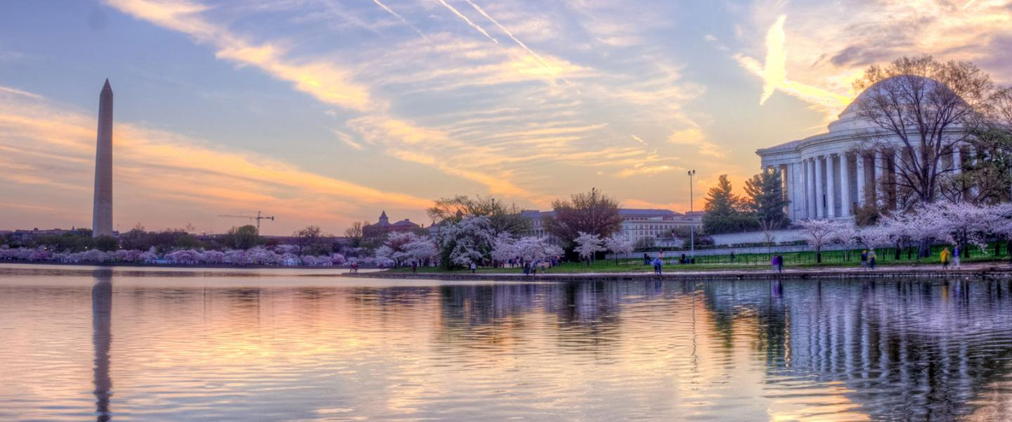 Cherry blossoms around Tidal Basin
