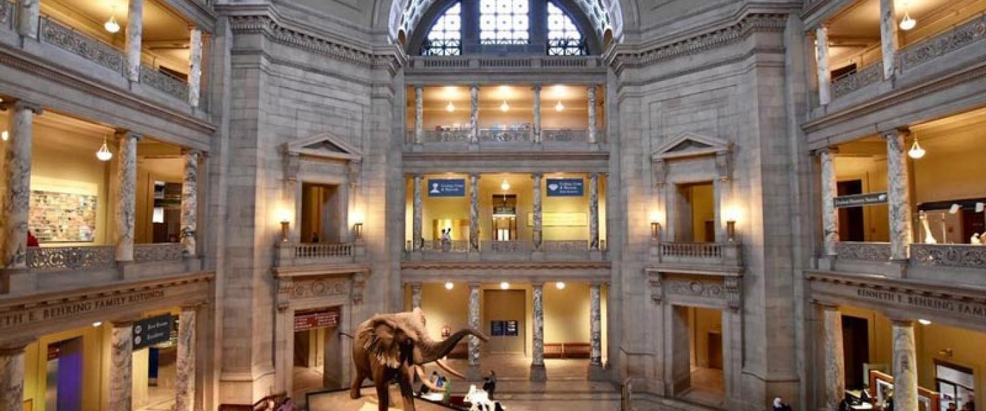 @michellefortephotography - Atrium im Smithsonian National Museum of Natural History in der National Mall - Free Museum in Washington, DC
