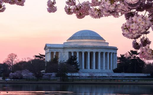 Jefferson Memorial Cherry Blossom Sunset
