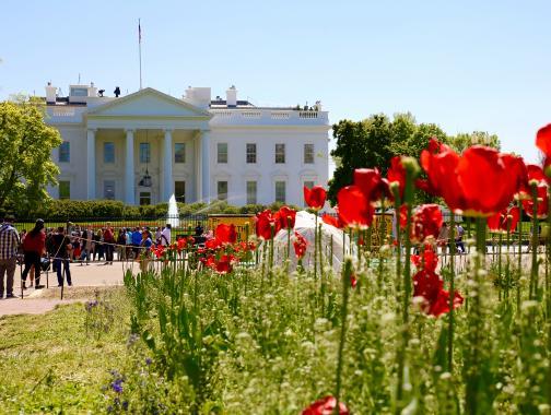 Casa blanca con tulipanes en frente