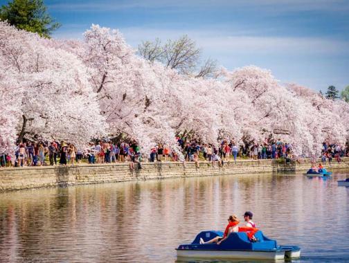 Paar auf Tretbooten im Tidal Basin - National Cherry Blossom Festival - Washington, DC