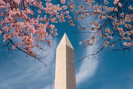 @byhopemarie - Cerezos en flor que enmarcan el Monumento a Washington en el National Mall durante el Festival Nacional de los Cerezos en Flor en Washington, DC