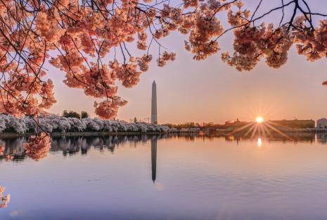 Cerezos en flor con el Monumento a Washington en Tidal Basin