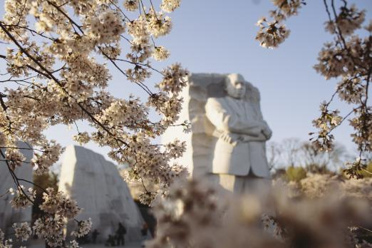 Cherry Blossoms at MLK Memorial