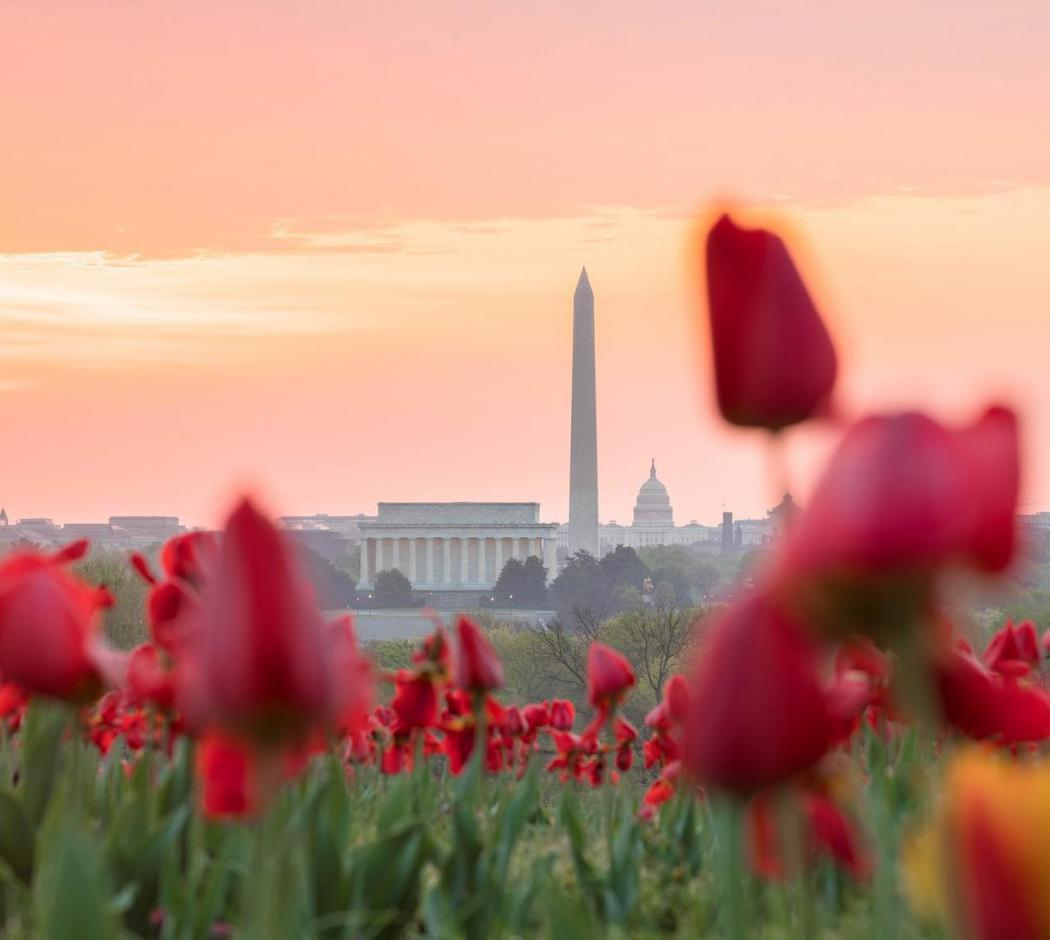 @johiattkim - Tulips with National Monument in background